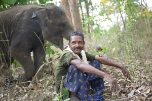 mahout-with-his-orphaned-elephant